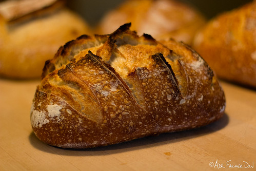 Sourdoughs-Loaves (10 of 11) | by adkfarmerdan
