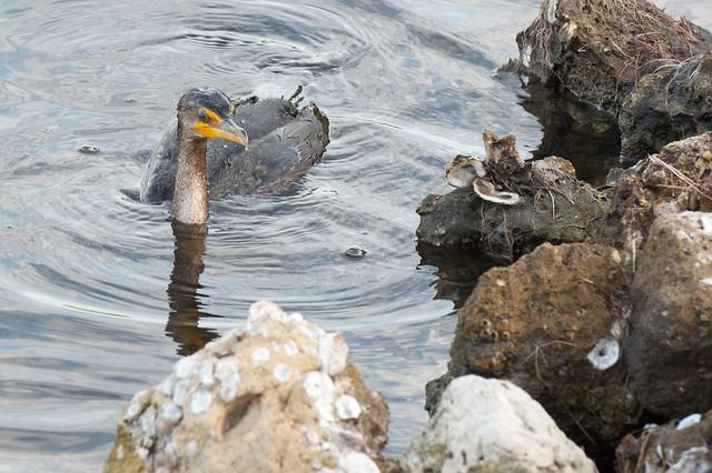 Wildlife Refuge Sanibel Island Florida