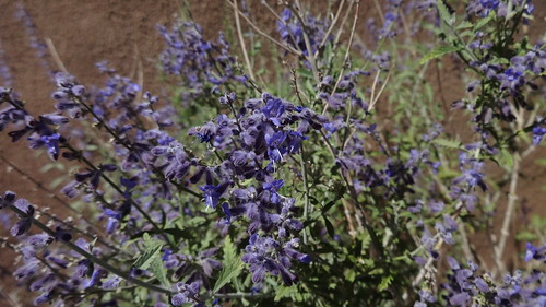 lavender colored wildflowers - photo #32