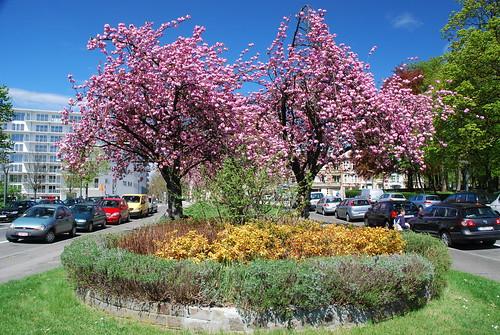 Parterre de fleurs devants les cerisiers stephane mignon for Parterre 3d