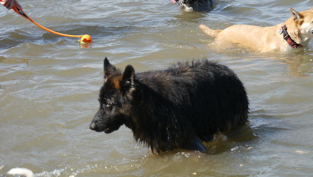 Dog Park Seattle Magnuson