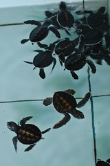 Spend some time at Turtle Conservation and Education Centre - Things to do in Denpasar (Bali)