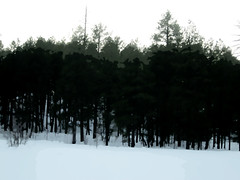 Cutouts of a Snowy Arizona Forest