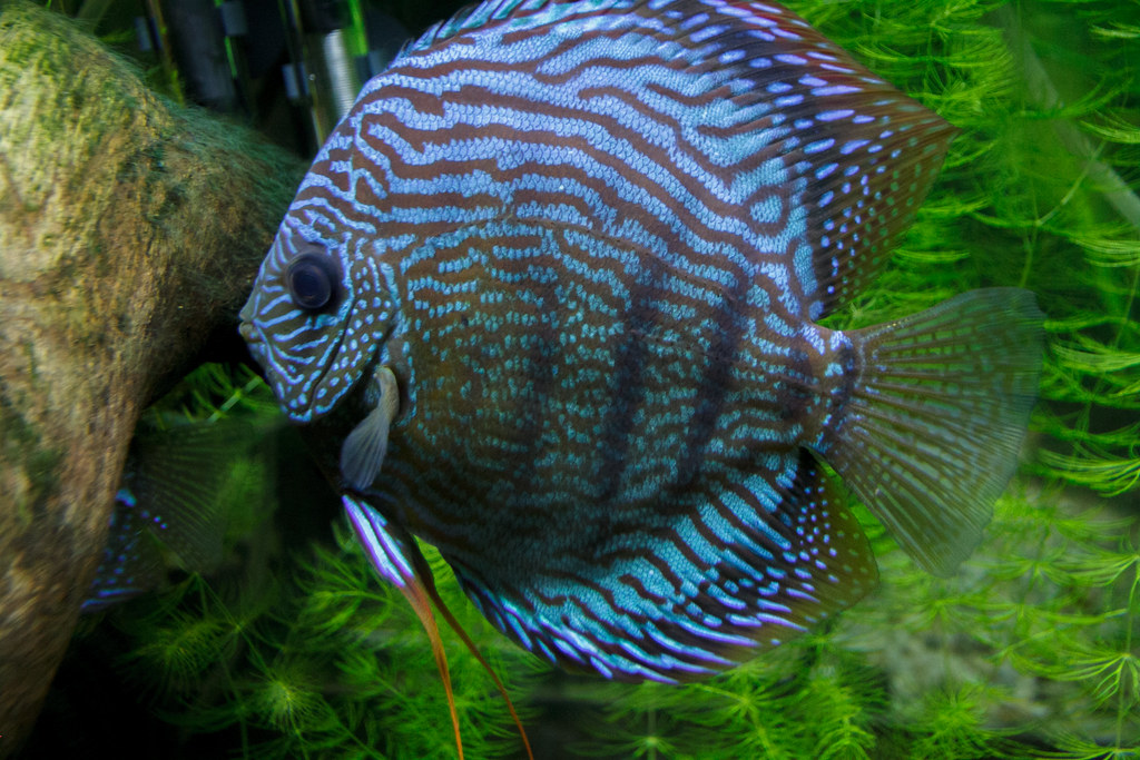 Neon blue fish | Ethan Trewhitt | Flickr