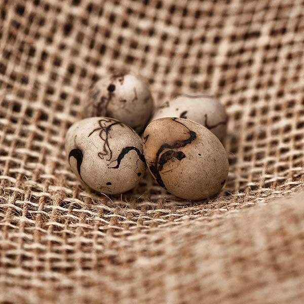 Exhibition D Free : Reed bunting eggs birds of different species lay