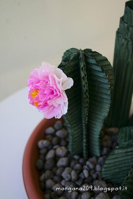 Cactus_06w