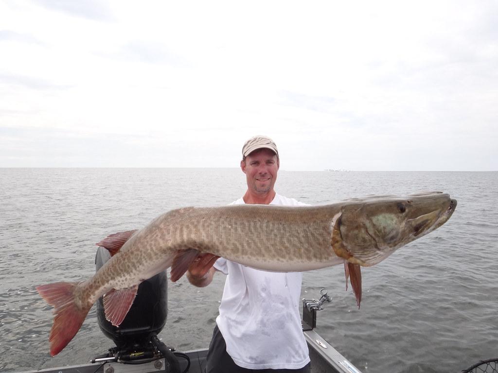 Ontario River Musky Fishing