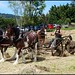 Waikato Heavy Horse hay making day
