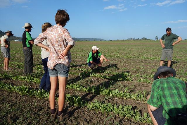 cqshs soil health field day