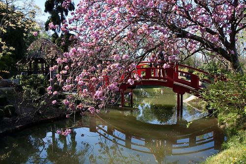 Jardin japonais toulouse la petite histoire sur mon blog flickr - Les jardins d isaure toulouse ...