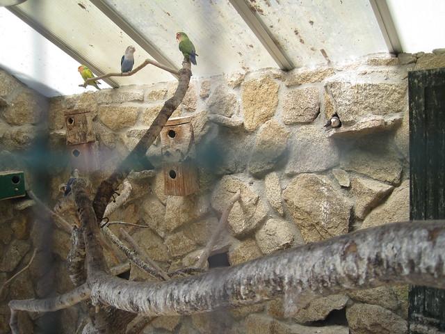 Agapornis en Avifauna Parque Zoológico Ornitológico