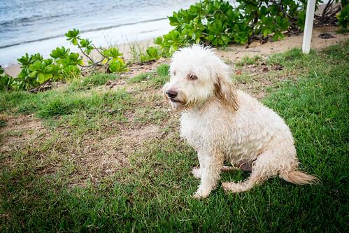 Kahala Morning Dogs:  Sept 3, 2016