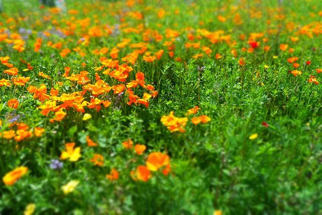Le jardin botanique bordeaux flickr photo sharing for Bordeaux jardin botanique