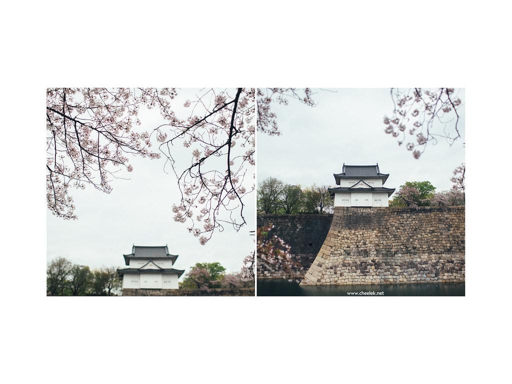 Portrait_Sakura-06
