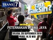 Saksikan Liputan TV Trans7 Peternakan Etawa Jaya 20 September 2016