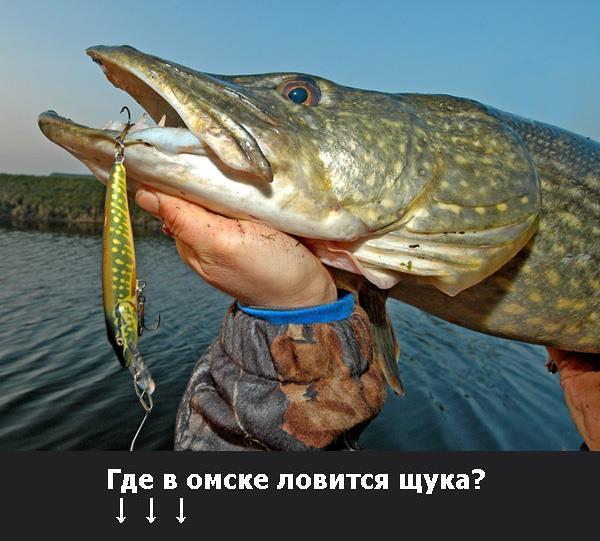 Где в омске ловить щуку? Щуку запрещают ловить любителям Рыбу запрещают ловить рыбакам
