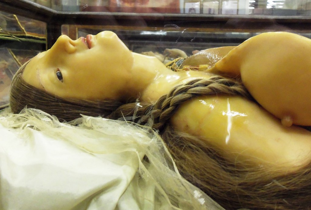 wax-anatomical-model | wax anatomical model - La Specola ...