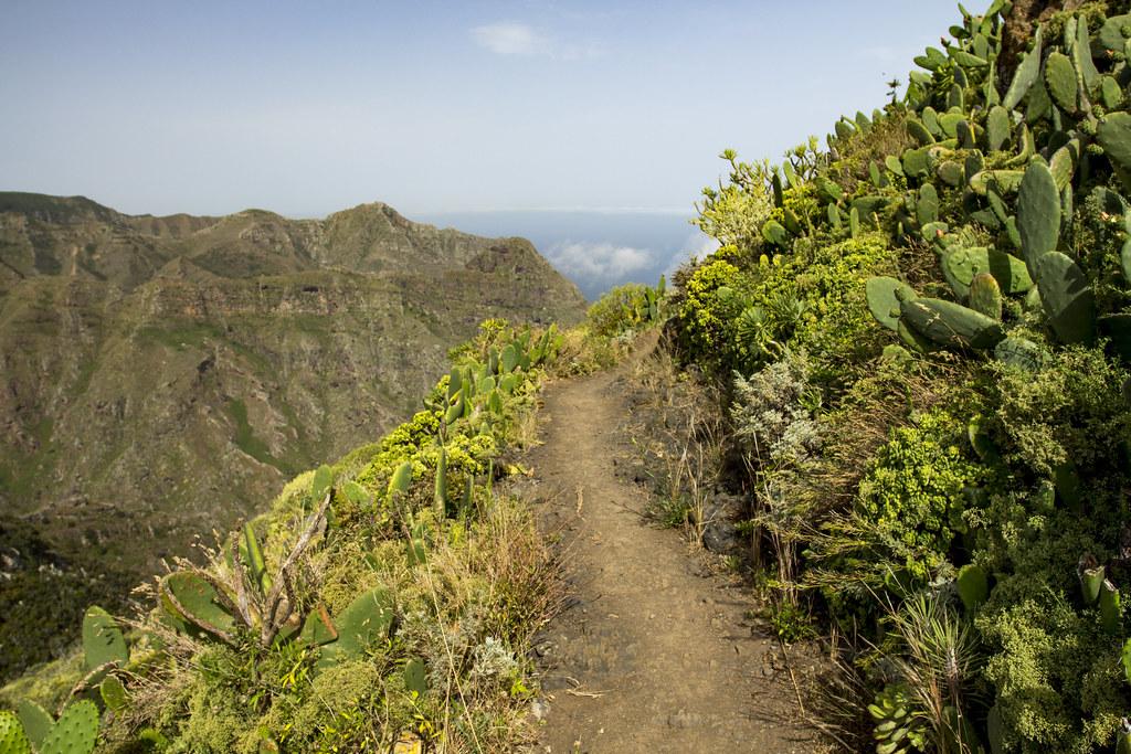 Chinamada path to Punto del Hidalgo - Anaga, Tenerife