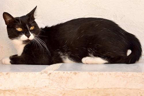 Gitana, gata blanquinegra dulce y tranquila esterilizada, nacida en Febrero´14, en adopción. Valencia. ADOPTADA. 29350111981_50b50334b1