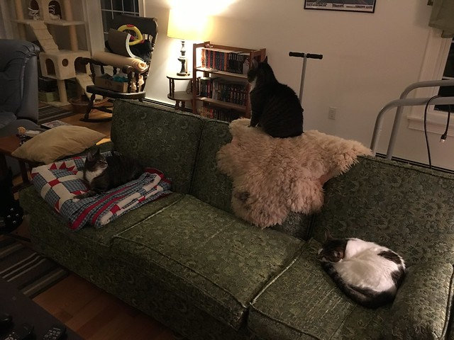 All three cats on the couch