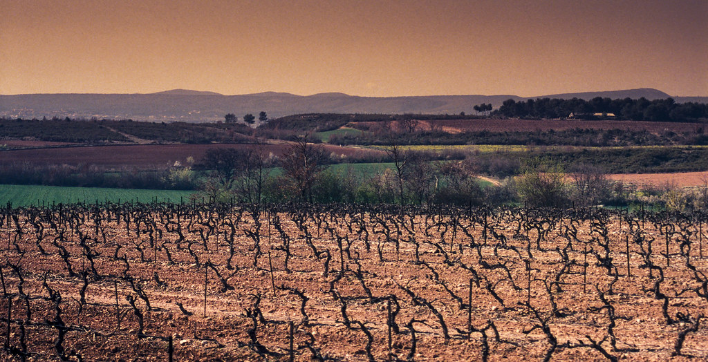 South of France Vinyard | Vinyard in the South of France nea ...