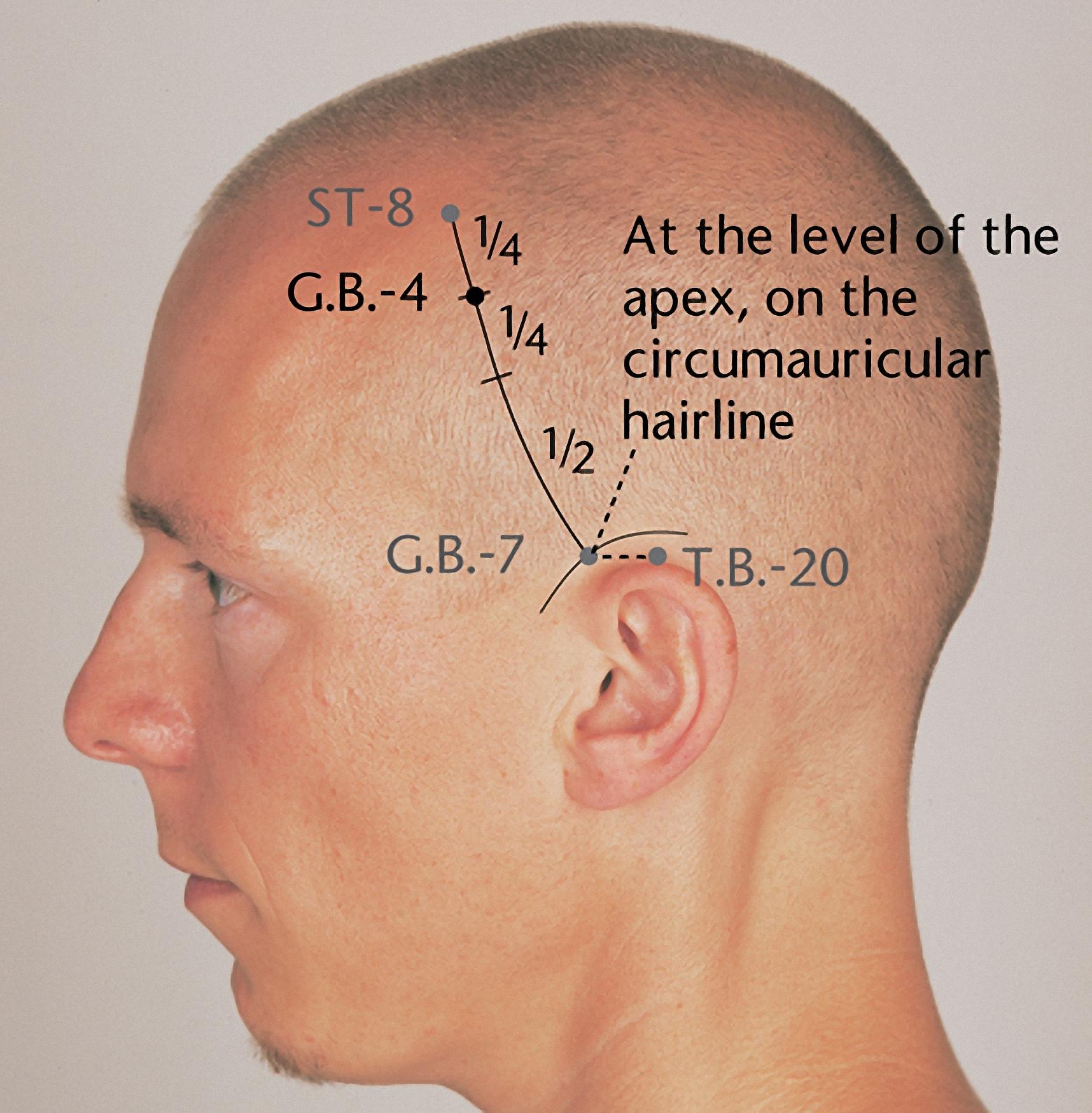 Claudia Focks. Atlas of Acupuncture. Churchill Livingstone, 2008.