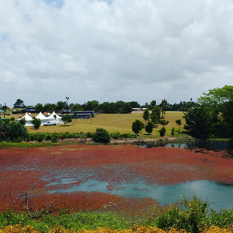 view towards possible site for dual crop at mackay botanical gardens
