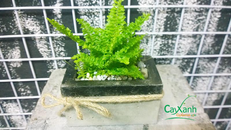cayxanh24h.com | duong xi thai