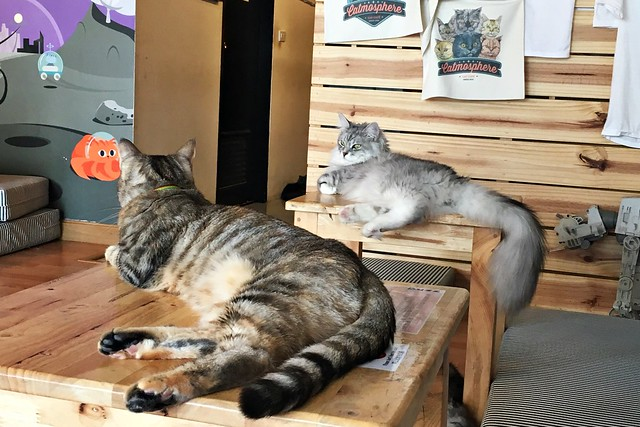 Catmosphere Cat Cafe