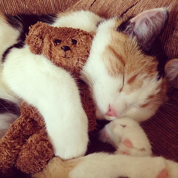 Cat Hugging Bear Gif