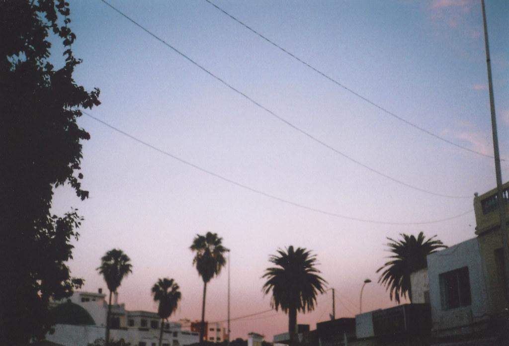 Palm Trees Tumblr Vintage Assilah