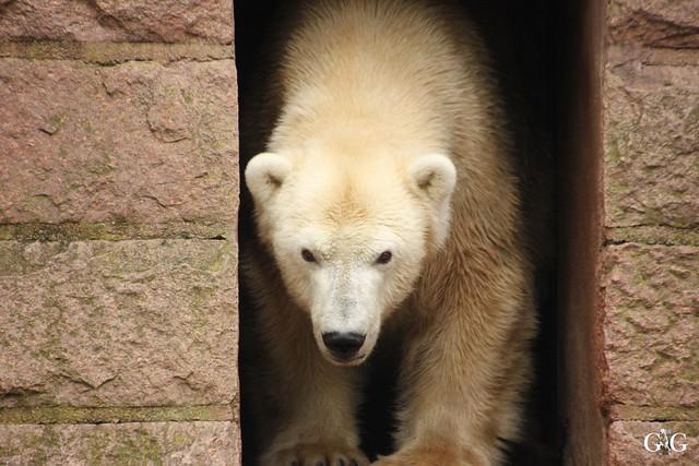 Zoo Rostock 02.10.201638