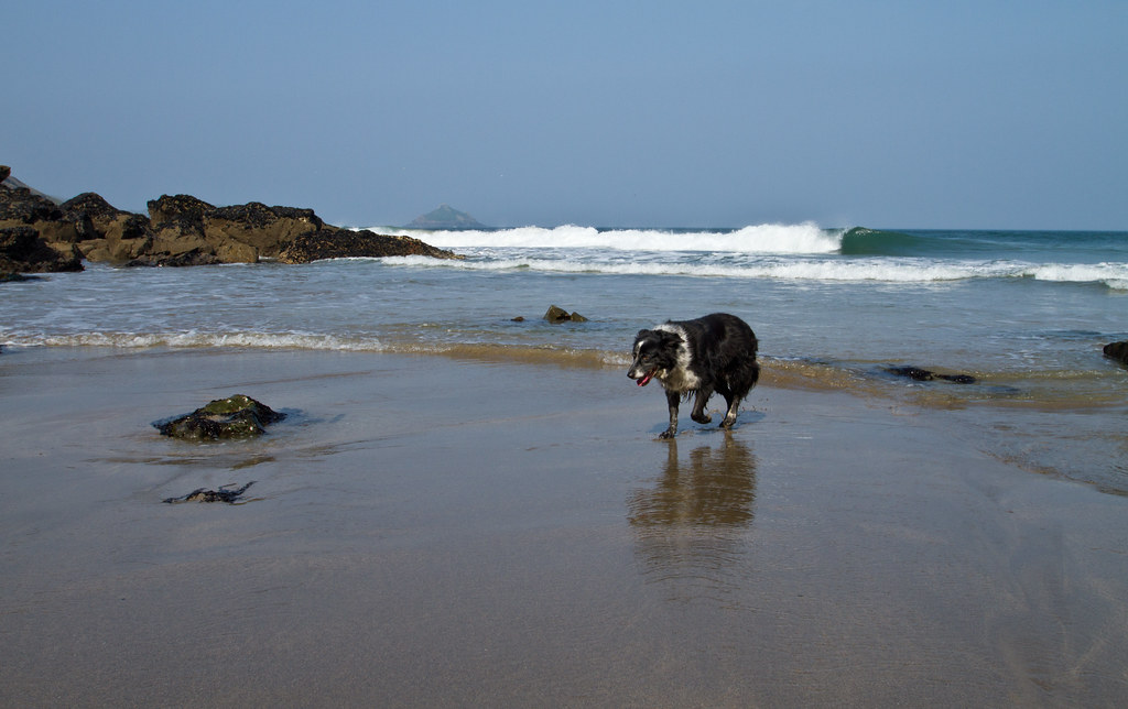 Dog Walking Jobs Cornwall
