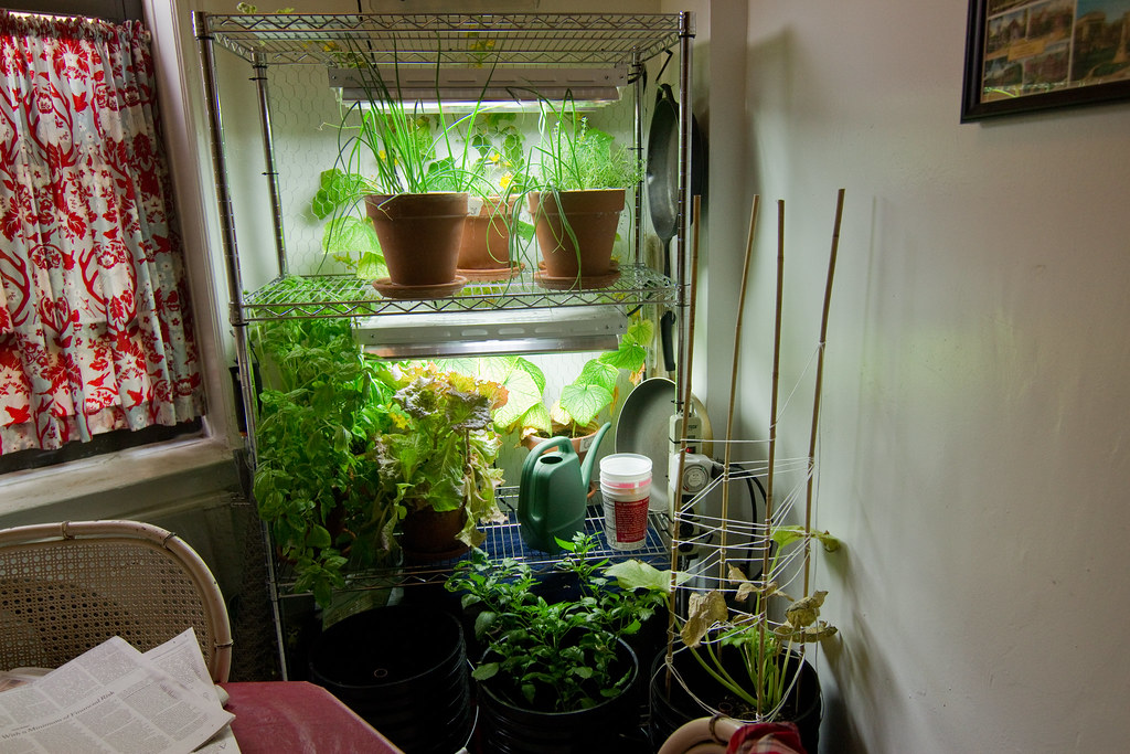 Indoor apartment gardening chris trudeau Flickr