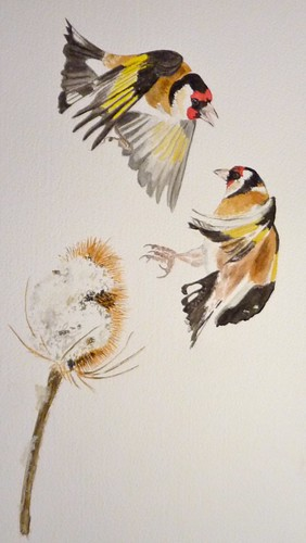 Watercolour - Goldfinches | by badgerfrombath