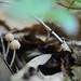 Mushroom Hunt in l'Ardèche