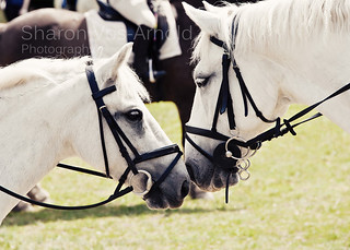 Horse whisperers | by ♥ Angel of light ♥