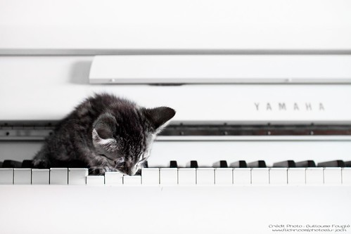 Already a music-loving cat... | by U-Jack
