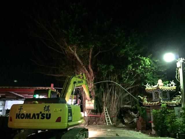 台東救樹,民間主動投入協力,夜深仍進行搶救。圖片來源:樹花園 Treegarden。