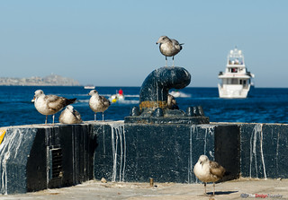 Sea Gulls | Cabo San Lucas | The Design Foundry | by thedesignfoundry