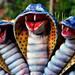 Snake figurines