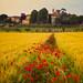 Tuscany Dreamland