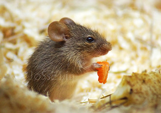 PS12.26 - Berlin Tierpark - Tiny mouse | by _JoSsElin_