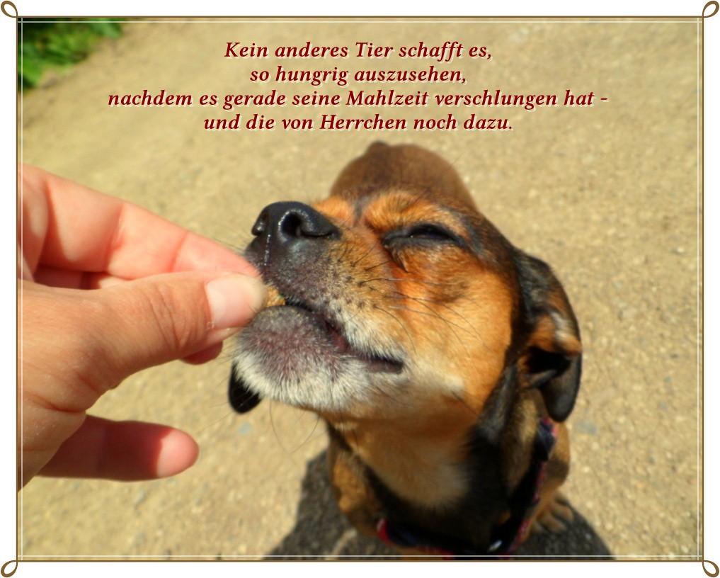sprüche hundeliebe Amymaus : )   .oder die von Frauchen ; ))))   hexeli76   Flickr sprüche hundeliebe