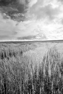 Wheat Field Cathkin Braes | by Stephen Martin Photography