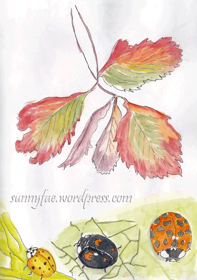 strawberry-leaf-and-ladybird-sketches