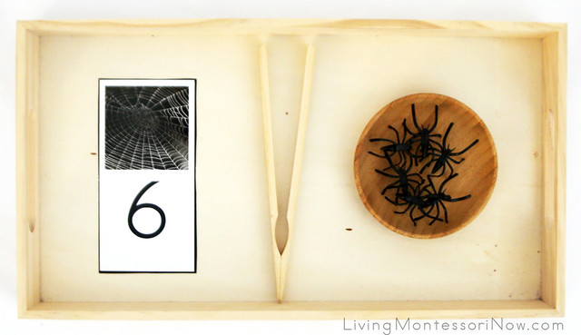 Spider Counting and Transferring Tray