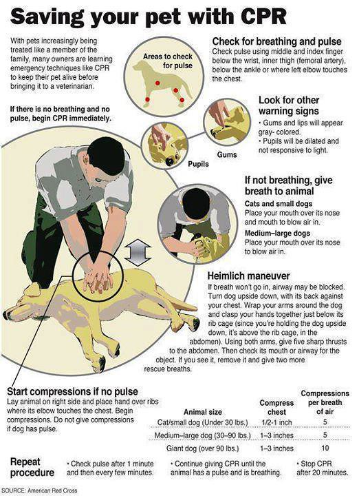 Dog Cpr Instructions Lots More Dog Stuff On Our Dog Facebo Flickr
