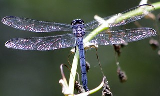 Dragonfly/light | by sweetpeach56
