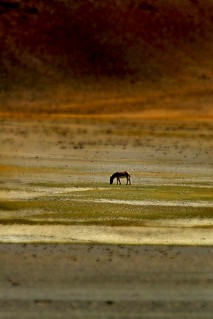Wild Horse - Himalayan Landscapes - | by http://mathiaskellermannphotography.com